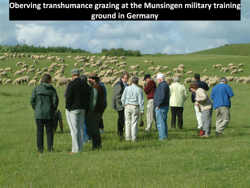 Observing transhumance grazing at Munsingen military academy training ground